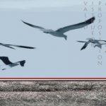 Έκθεση ζωγραφικής Θεόδωρου Ψυκάκου, στο Εθνικό Αρχαιολογικό Μουσείο ως τις 2 Ιουνίου