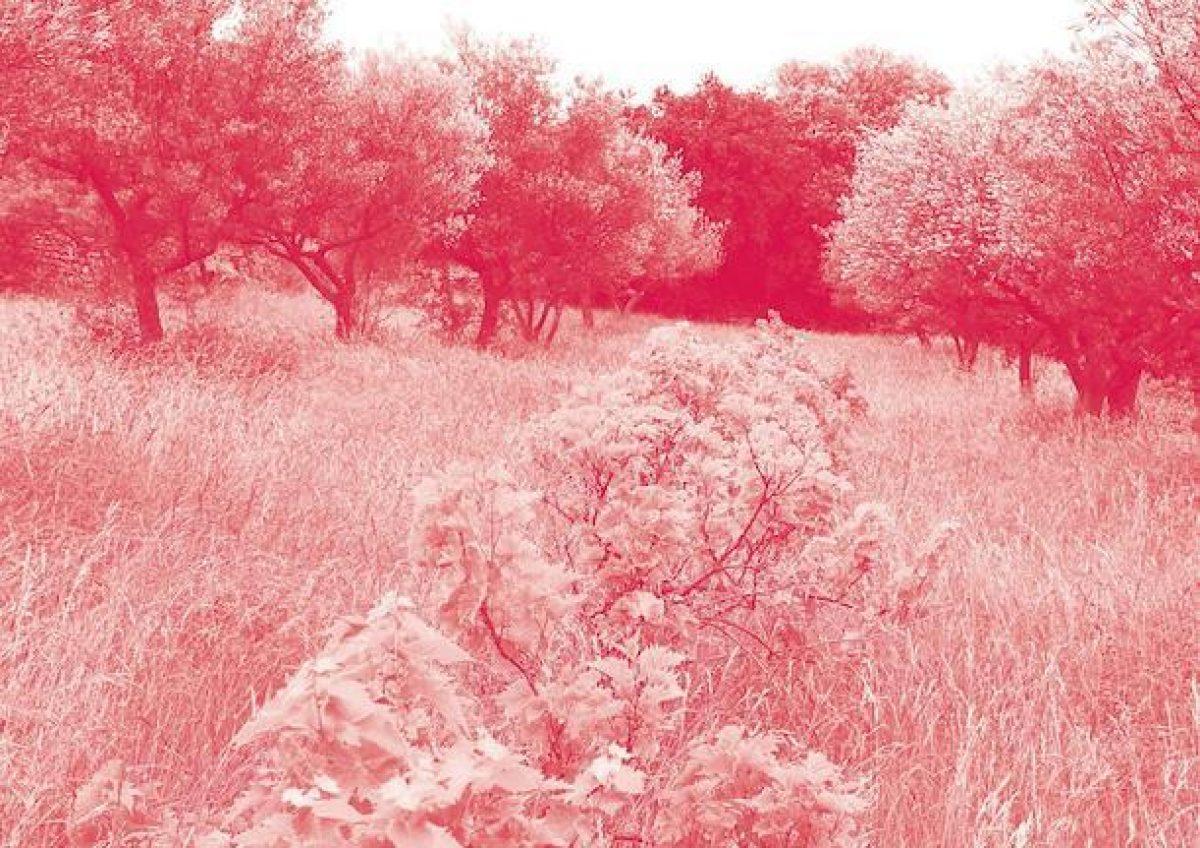 """Επιστημονική Ημερίδα """"Η μεσογειακή γεωργία απέναντι στην κλιματική αλλαγή : Η περίπτωση των αμπελιών και των ελαιοδένδρων"""", 9 Οκτωβρίου 2015"""